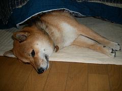 2007_11_29_10001.jpg