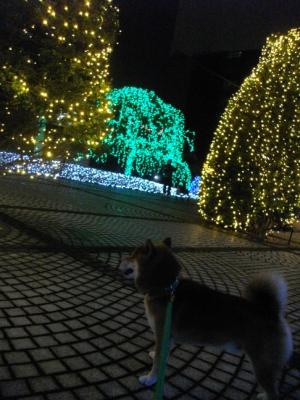 2012.12.19.02.jpg