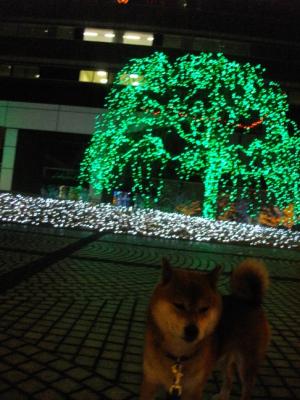 2012.12.19.03.jpg